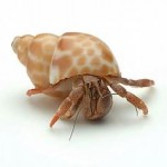 Hermit Crab Fun